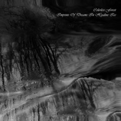 Imprints Of Dreams In Hyaline Ice