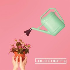 We - Cold Cherry
