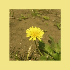 Dandelion (Single)