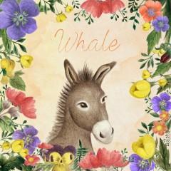 Donkey (Single) - Whale
