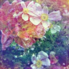We Are The Dreamers - The Stargazer Lilies