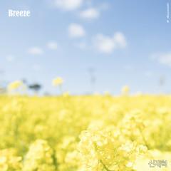Breeze (Single)