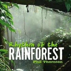 Rhythm Of The Rainforest - Phil Thornton
