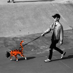 Tiger - Boy Wonder