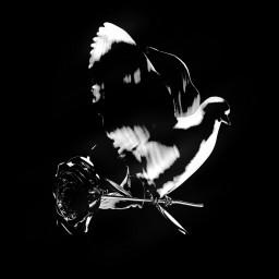 Diana (Remix)