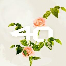 Flower To You (Instrumental)