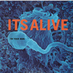 I'm Your Man (Radio Edit)