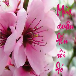 Mùa Xuân Đến Rồi Đó