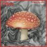 Mushroom Wave
